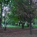 Parco (attuale)