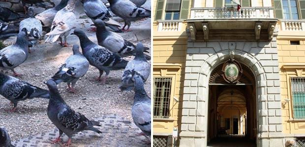 piccione-tribunale-multa