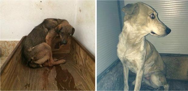 Scarsa igiene acqua putrida carcasse sotto terra sequestri a scodinzolandia ecco i dettagli - Cani che non vogliono fare il bagno ...