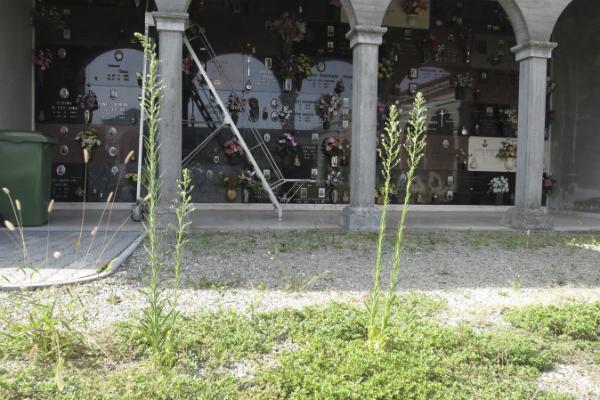 cimitero cava 5