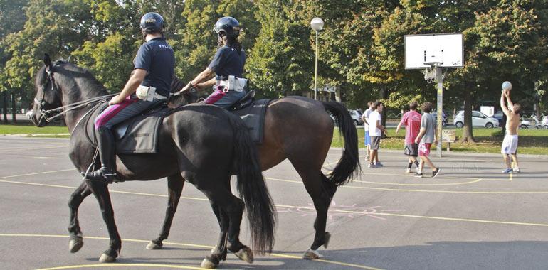 cavalli-d2