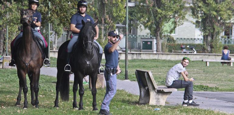 cavalli-d3