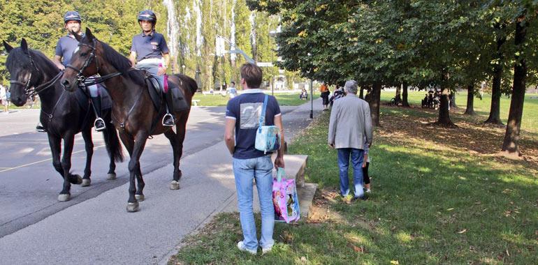 cavalli-d5