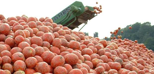 evidenza-pomodoro