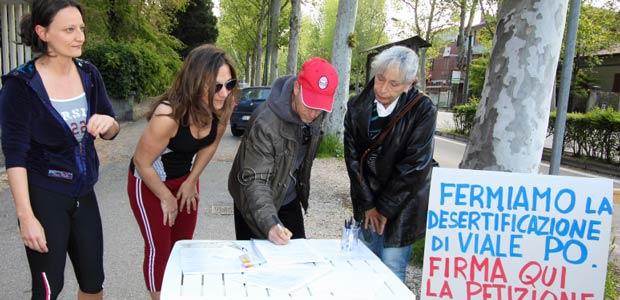 petizione-alberi-viale-po