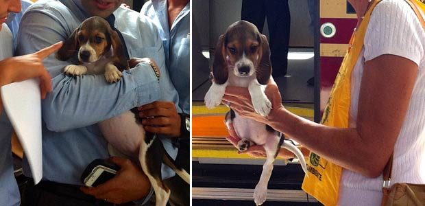beagle-cremonesi-adottati