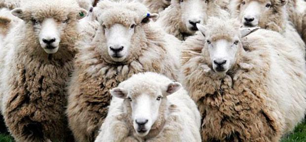 pecore-precipitate