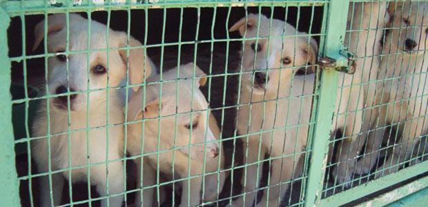 cuccioli-in-gabbia