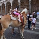 cavalli-gallery6