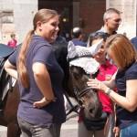 cavalli-gallery9