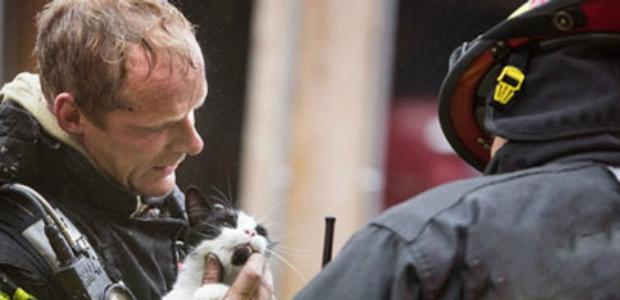 gatto salvato-evid