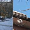 neve-evidenza