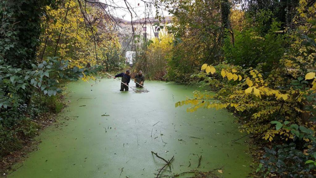 Manutenzione laghetti comunali risparmio di acqua e for Pulizia laghetto